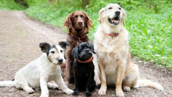Dogs and Poetry | Lighthouse Writers Workshop